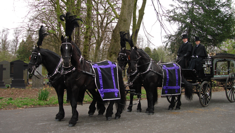 Horse drawn funeral hearse